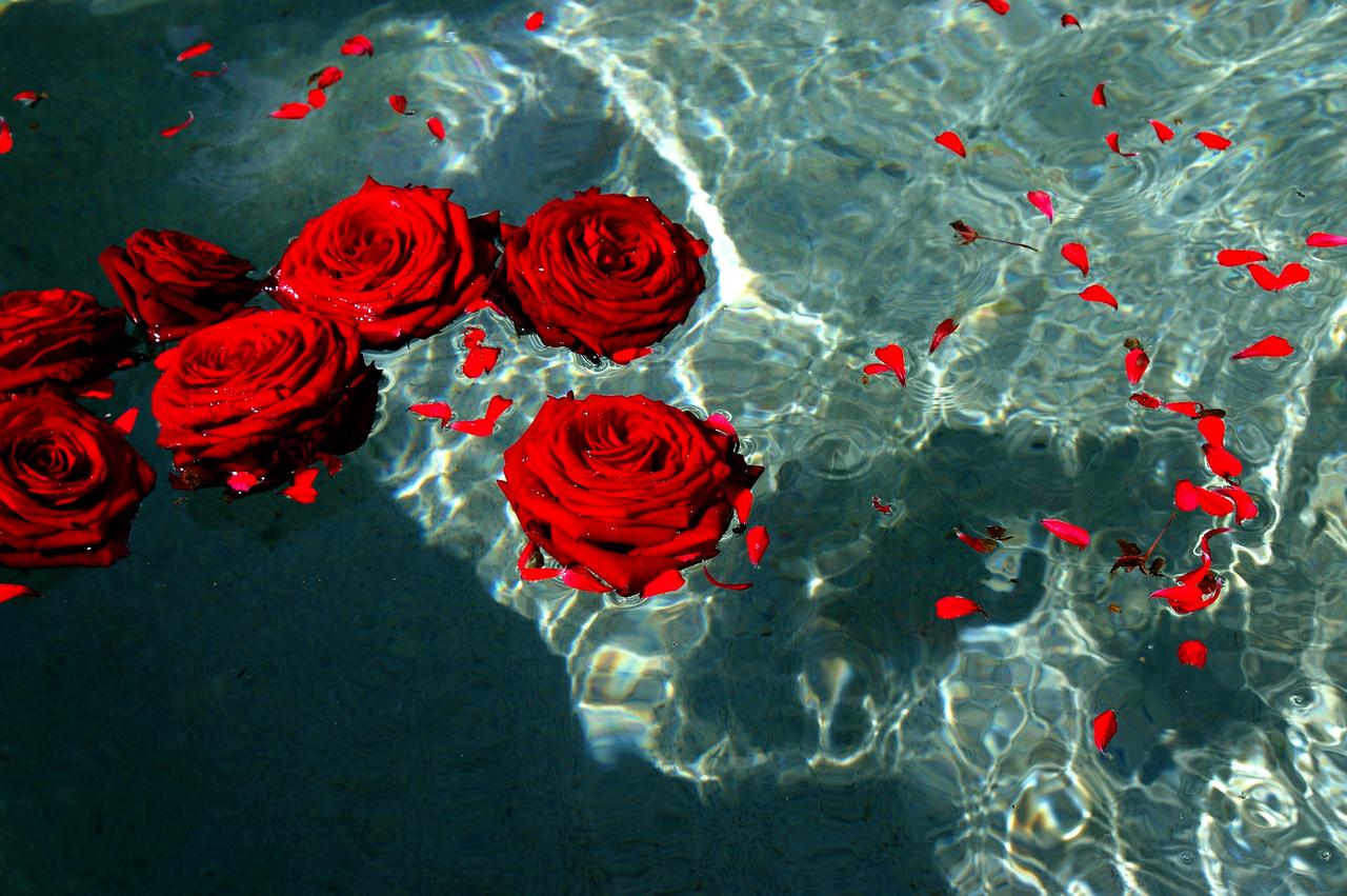Картинка розы на воде